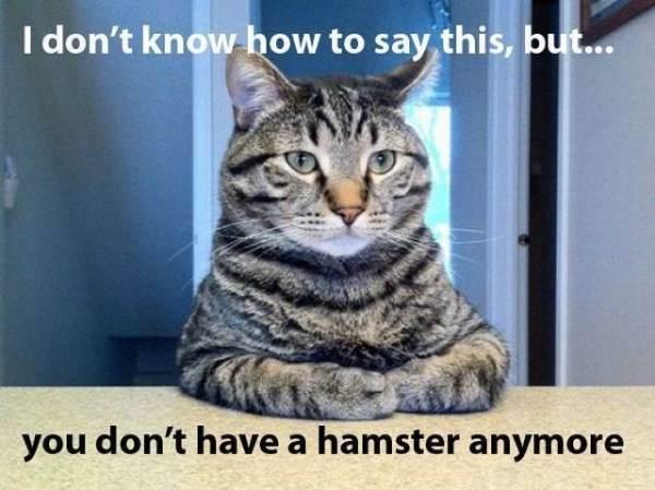 Kat heeft iets op te biechten