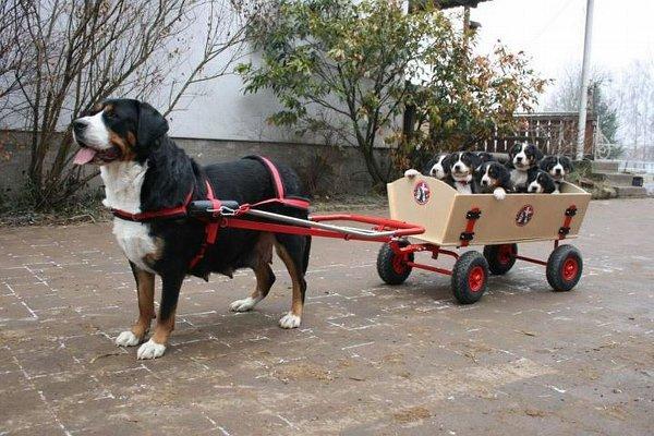 Uitlaatservice voor en door honden