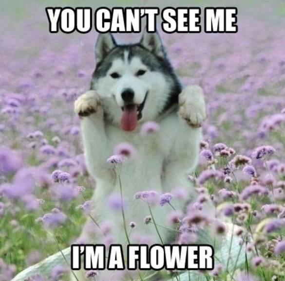 Je ziet me niet, ik ben een bloem