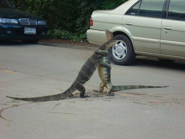 2 alligators geven elkaar een knuffel