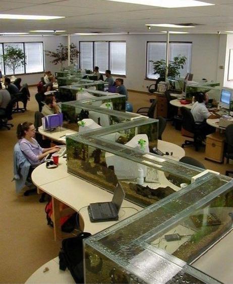 Aquarium op kantoor