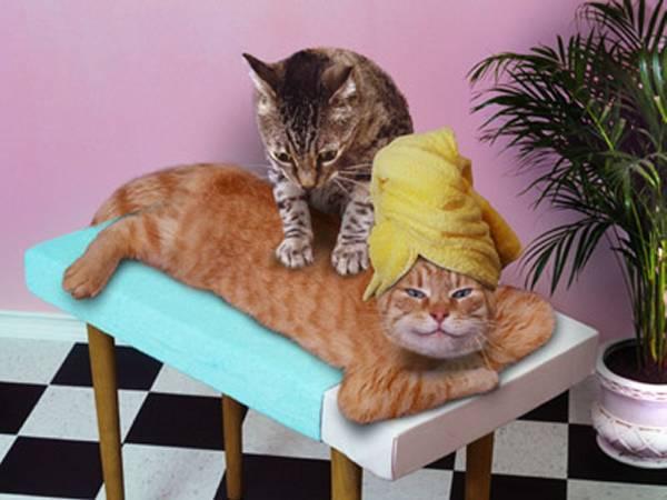 Massage voor en door katten