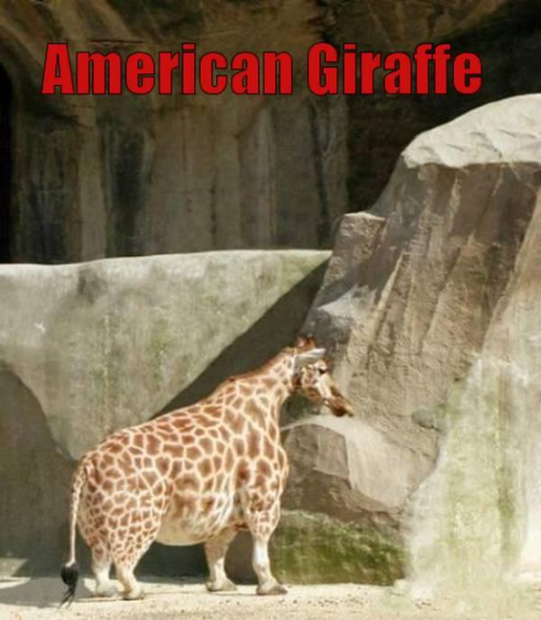 De Amerikaanse giraffe